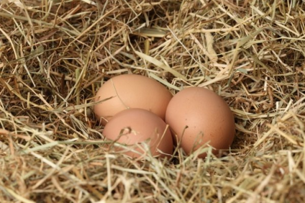 куриные_яйца